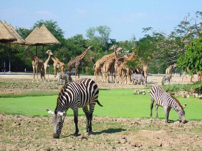 vinpearl-safari
