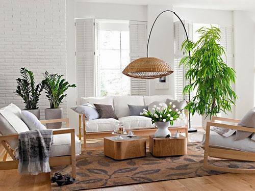 Nên trồng cây gì trong phòng khách