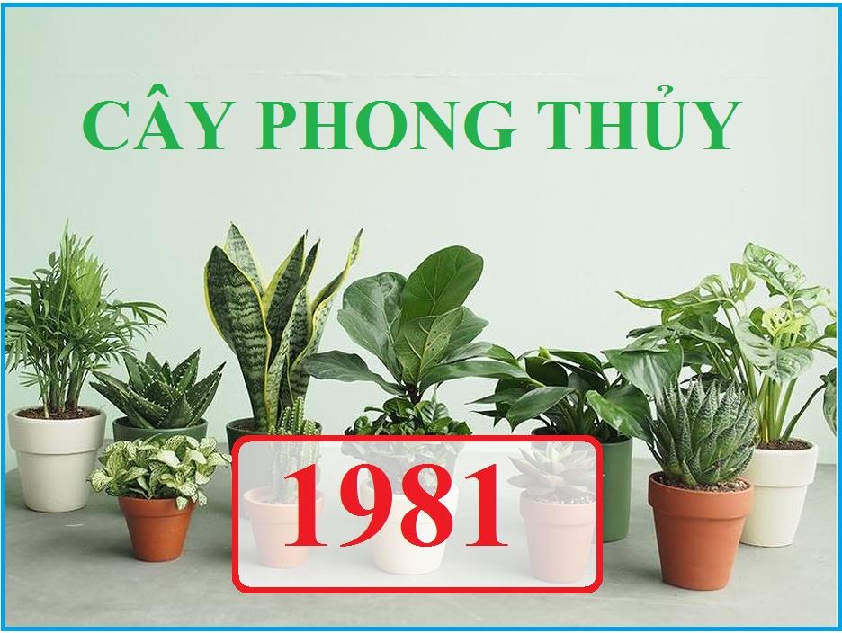 Tuổi Tân Dậu 1981 nên trồng cây gì