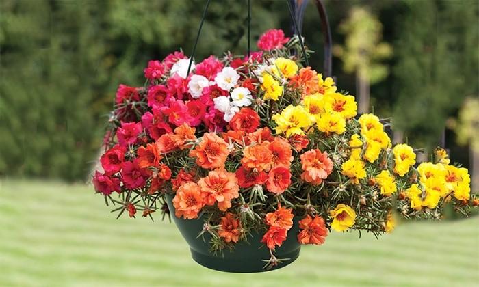 trồng hoa gì trên ban công