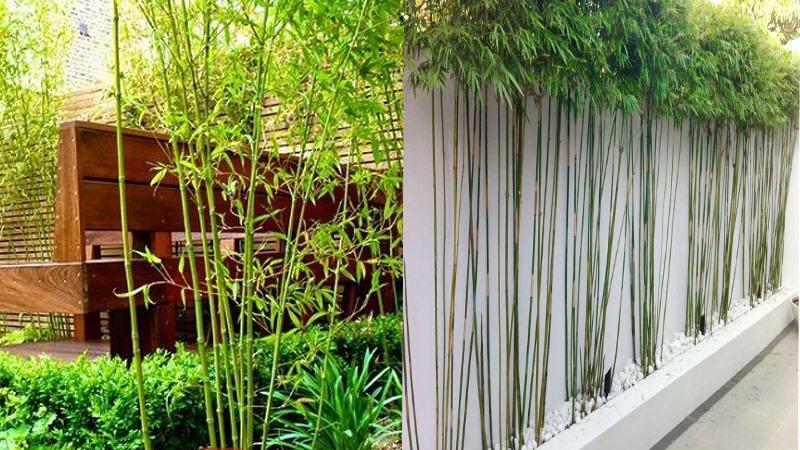 Nên trồng cây gì trước nhà để mang lại phong thủy tốt cho gia đình?