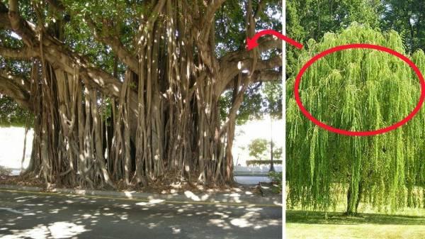 cây không nên trồng trước cửa nhà