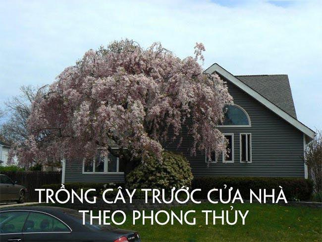 Trồng cây phong thủy trước cửa nhà