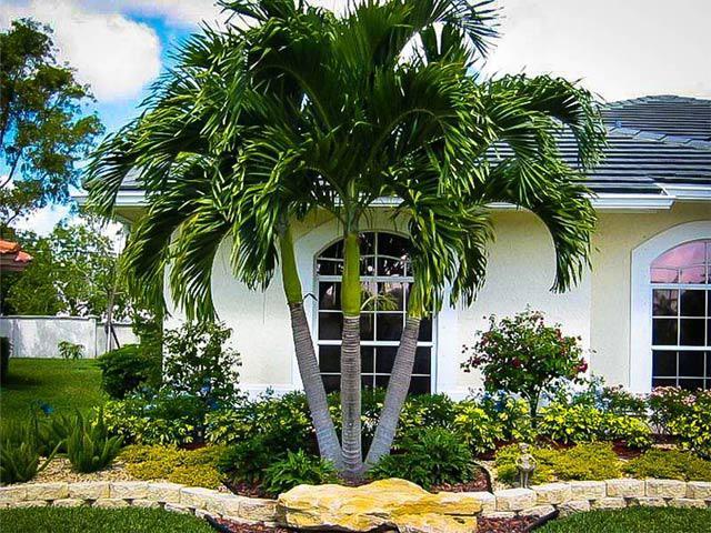 trồng cây dừa cảnh trước cửa nhà đón lộc