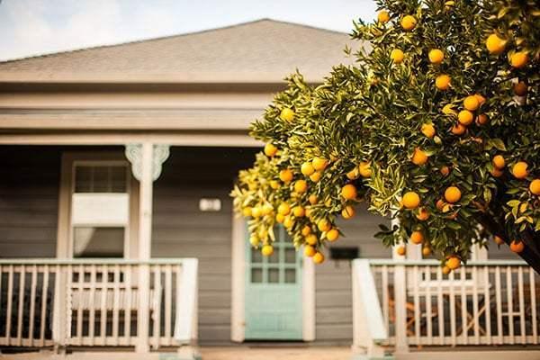 nên trồng cây gì trước cửa nhà - cây cam, quýt, chanh